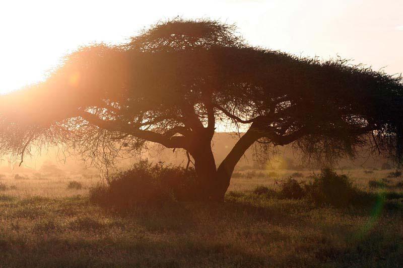 Kenyan Landscapes 2
